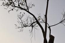 Silhueta De árvore Após Poda