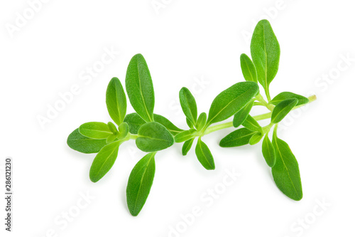 Fotomural  Fresh thyme spice isolated on white background