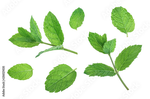 Obraz fresh green mint leaves isolated on white background, top view. Flat lay - fototapety do salonu