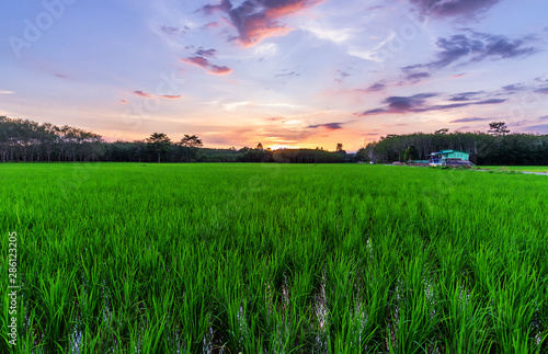 Foto auf Gartenposter Grun Rice field rural with colorful of sky in twilight