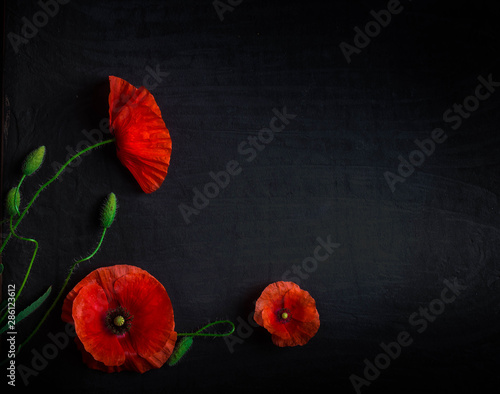 Montage in der Fensternische Mohn Bouquet of red poppies and white Spiraea on a black background. Wild flowers.