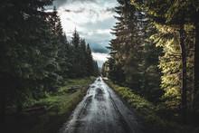 Summer Rainy Road Through Forest On Sumava, Czech Republic