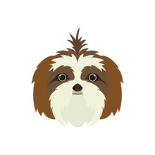 Head Of Cute Shih Tzu Dog On W...
