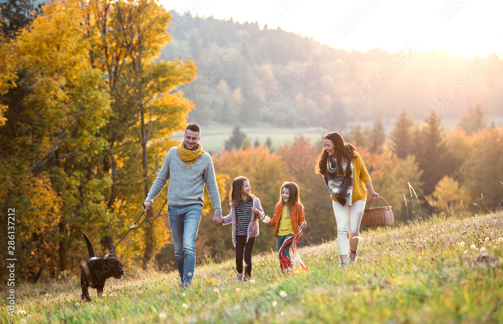 Fototapeta A young family with two small children and a dog on a walk in autumn nature.