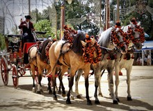 Andalusian Horses And A Carria...