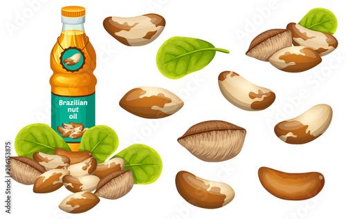 Set brazilian nut oil, seed and leaf Tableau sur Toile
