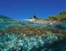 A Cormorant Bird Standing On Rocky Sea Shore, Split View Over And Under Water Surface, Mediterranean, Spain, Balearic Islands, Ibiza