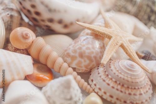 Fotomural  Seashells background