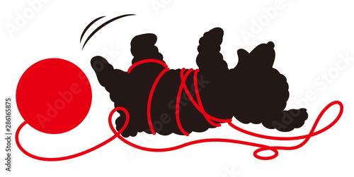 Fototapeta 毛糸に絡まるトイプードルシルエット