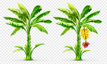 Set Of Banana Palm Tree With F...