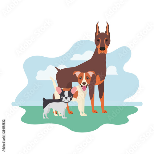 Poster Dogs set of adorable dogs on white background