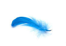 Blue Fluffy Feather Soft Isola...