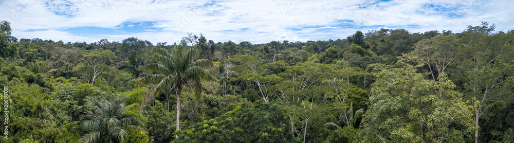 Fototapeta Beautiful  drone aerial view of tree tops of brazilian amazon rainforest in summer sunny day. Concept of conservation, ecology, biodiversity, global warming, environment and climate change.