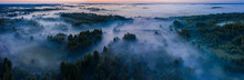 Aerial View Of The Forest, Fie...
