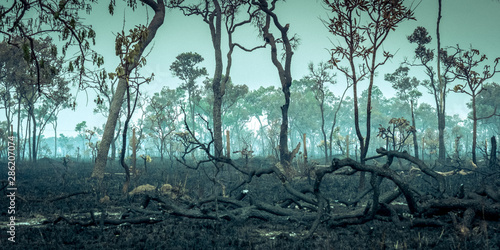 Tela Burnt Down Amazon Tropical Rain Forest, Richest Ecosystem on Earth Destroyed to