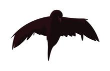 Raven Happy Halloween Celebration Design