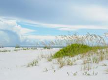 Sea Oats On The Beautiful Gulf Coast Of Florida