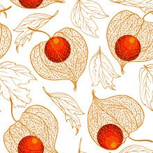 Physalis Fruit And Autumn Leaves, Vector Illustration