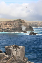 Galapagos Islands And Its Wild...