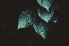 Dark Leaf Detail Deep Green, C...