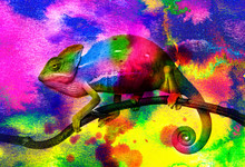 Chameleon - And Wild Colors