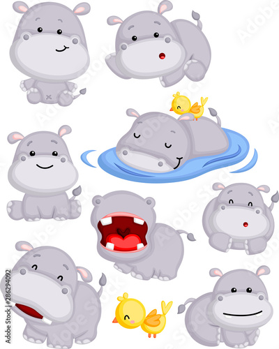 a vector of a cute hippo in many poses