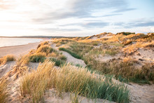 Reed Plants On Swedish Beach During Sunset