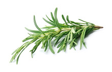 Twig Of Rosemary On A White Ba...
