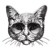 Portrait Of British Shorthair Cat With Sunglasses, Hand-drawn Illustration, Vector