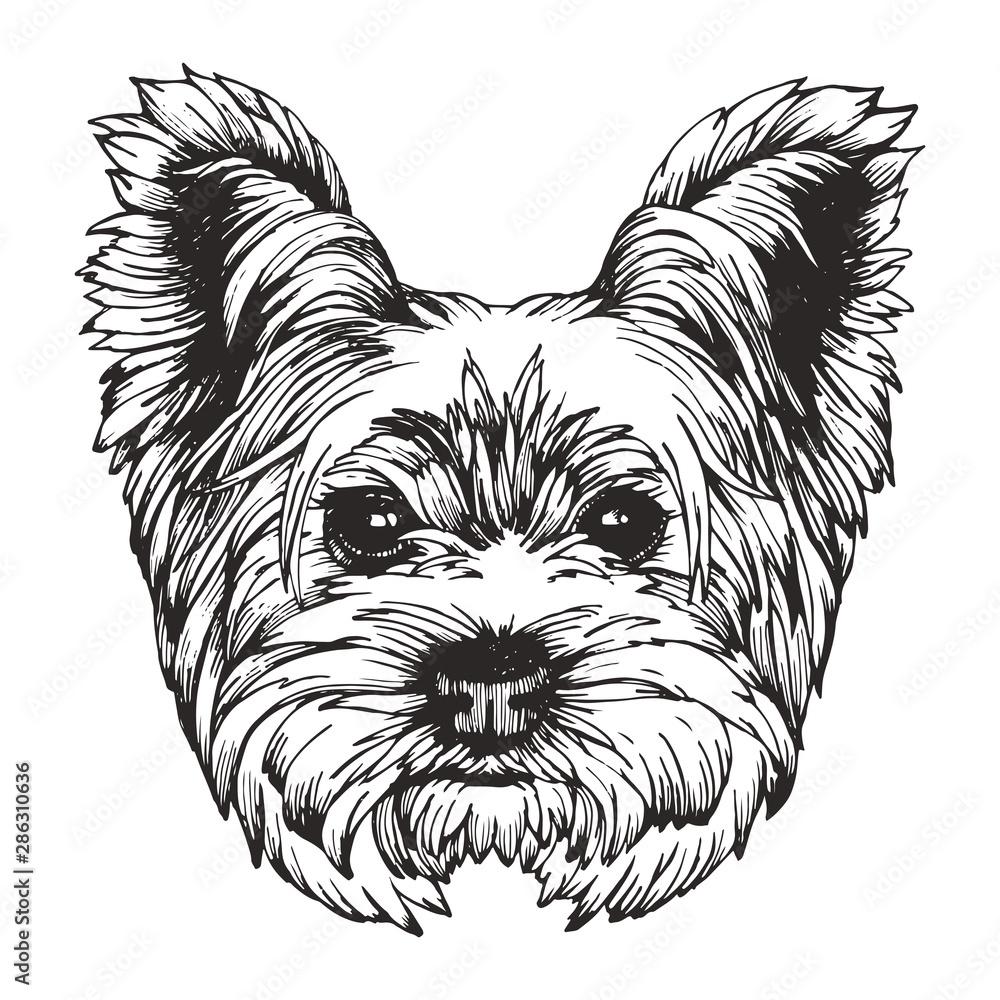 Fototapety, obrazy: Portrait of Yorkshire Terrier Dog. Hand-drawn illustration. Vector