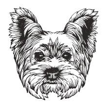 Portrait Of Yorkshire Terrier Dog. Hand-drawn Illustration. Vector