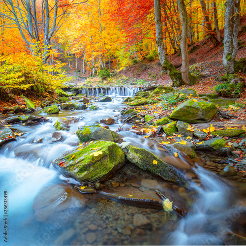 Colorful Autumn landscape -  river waterfall in colorful autumn forest park with yellow red  leaves