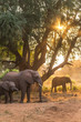 canvas print picture - Elephants at sunset
