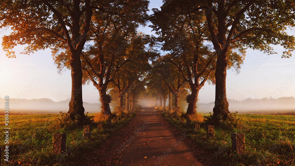 Fototapeta beautiful autumnal avenue in the fog and sun