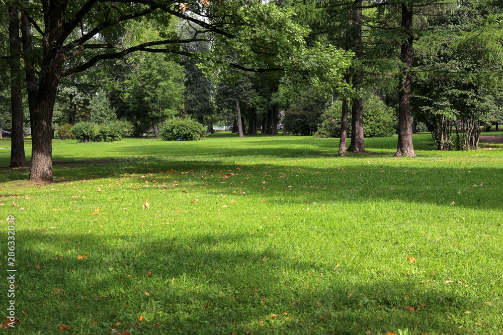 Fototapeta empty city green park with lawn tall trees and trimmed grass with fallen leaves on an early sunny warm morning