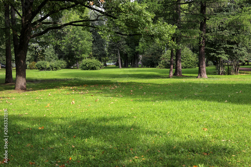 Obraz empty city green park with lawn tall trees and trimmed grass with fallen leaves on an early sunny warm morning - fototapety do salonu