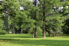 Empty City Green Park With Lawn Tall Trees And Trimmed Grass With Fallen Leaves On An Early Sunny Warm Morning
