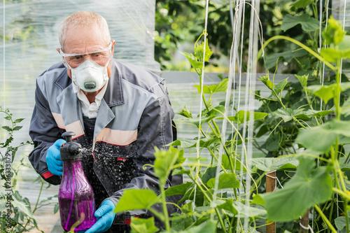 Fototapeta Worker sprays organic pesticides on plants obraz