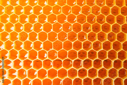Honeycombs with sweet golden honey on whole background, close up Fototapeta