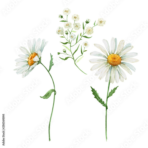 wildflowers daisies on a white background. Fototapet