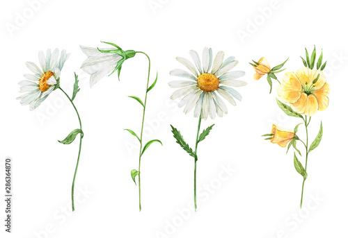 wildflowers set. watercolor drawing Poster Mural XXL
