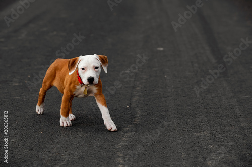 Fotomural Cute puppy crossbreed dog on dark background.