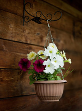 Petunia In A Pot, Decor On Wooden Background. Vintage Retro Style