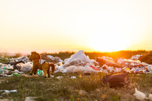 A Bunch Of Garbage In The Middle Of A Meadow And A Horse Toy, During Sunset.