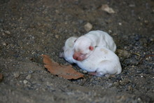 Two White Newborn Puppies Lying On The Ground