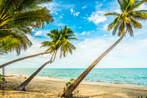 fototapeta na lodówkę Coconut trees by the beach.