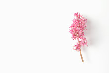 Dried Pink Hyacinth Flower On ...