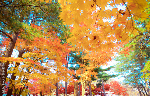 autumn leaves on white background Canvas Print