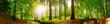 Leinwandbild Motiv Panorama vom Wald im Frühling mit heller Sonne, die durch die Bäume strahlt