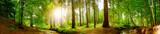 Fototapeta Fototapety z naturą - Panorama vom Wald im Frühling mit heller Sonne, die durch die Bäume strahlt